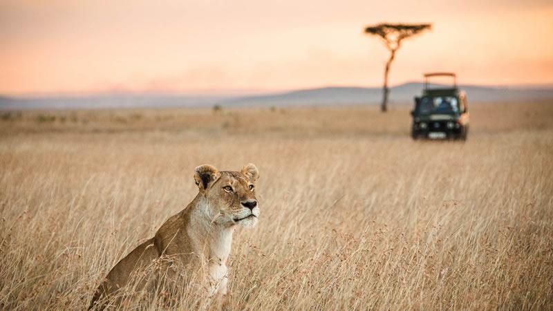 Euromotorhome® - Sudáfrica en autocaravana: ¡Nos vamos de Safari
